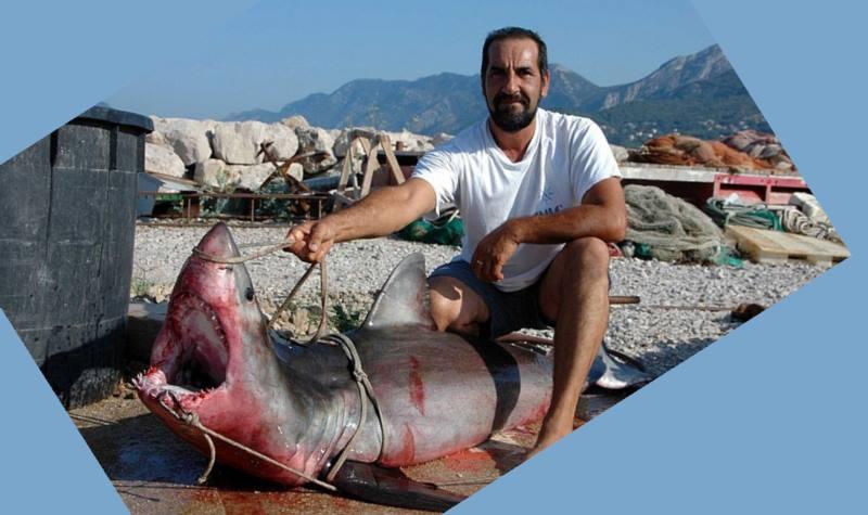 фото с акулой