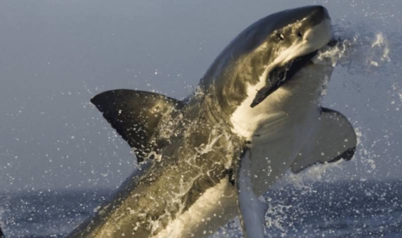 кадр фото с акулой